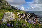 Cyclists on Vega Island, Norway