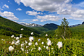 Cotton grass, mountain panoramas and gorges along the Silvervägen (R 77) to Junkerdal, Norway