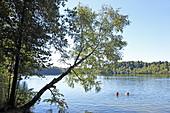 Steinsee, Moosach, Upper Bavaria, Bavaria, Germany