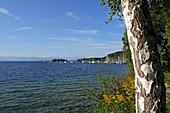 Westufer des Starnberger See, bei Niederpöcking, 5-Seen-Land, Oberbayern, Bayern, Deutschland