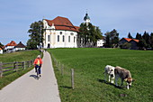 Cyclist and cow meadow in front of the Wieskirche, Steingaden, Pfaffenwinkel, Upper Bavaria, Bavaria, Germany