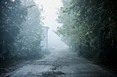 A foggy laneway at dawn in a small town outside of Moscow Russia.