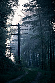 A dirt road with a derelict power pole in a birch forest in a fog at dawn in a rural area outside of Moscow Russia.