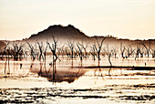 A forest of dead trees on the Ord River with Elephant Rock in the background at sunrise, smoke from controlled burning, Kununurra, Western Australia, Australia.