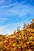 Red rocks against a blue sky on the banks of the Ord River, Kununurra, The Kimberley, Western Australia, Australia.