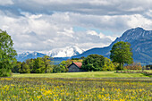 Field barn in the Oberland on a sunny spring day, Weilheim, Bavaria, Germany, Europe