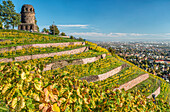 Vineyards of Radebeul in autumn, with the Bismarkturm in the background, Saxony, Germany