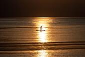 Stand-up-Paddler bei Sonnenuntergang auf dem Meer, Kungsbacka, Halland, Schweden