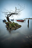 View of a tree and boats in the water of the Ammersee, Dießen, Diessen, Ammersee, Bavaria, Bavaria, Germany, Europe