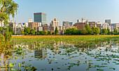 Shinobazu pond in Ueno Park, with the Ueno skyline in the background, Tokyo, Japan