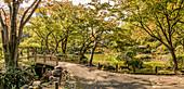 Hibiya Park (Hibiyakōen) in downtown Tokyo, Japan in autumn