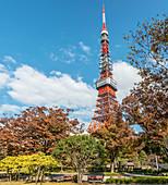 Tokyo Tower seen from Shibakoen Park, Tokyo, Japan