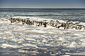 Groyne with ice floes on the beach in Schillig, Wangerland, Friesland, Lower Saxony, Germany, Europe