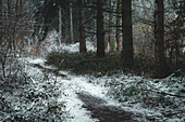 Snow-covered path in the Barkeler Busch forest, Schortens, Friesland, Lower Saxony, Germany, Europe