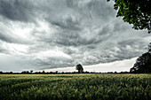 Storm clouds over grain field in Aurich-Brockzetel, East Frisia, Lower Saxony, Germany, Europe