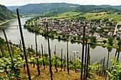 Via Wolf near Kröv on the Moselle, Rhineland-Palatinate, Germany