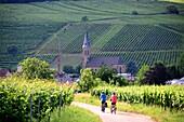 Near Birkweiler on the Palatinate Wine Route, Rhineland-Palatinate, Germany
