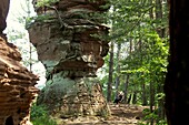 In the Dahner Felsenland, Palatinate Forest, Rhineland-Palatinate, Germany