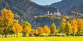 Neuschwanstein Castle near Hohenschwangau, Romantische Strasse, Ostallgäu, Bavaria, Germany, Europe
