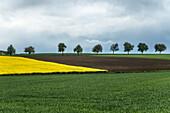 A row of trees in rural Bavaria, Monheim, Bavaria, Germany