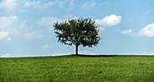 Lonely tree, Teisendorf, Bavaria, Germany