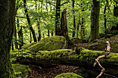 Deadwood and rocks in the natural forest reserve, Hermersbergerhof, Rhineland-Palatinate, Germany