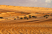 The Rub al-Khali desert in Oman is one of the largest sandy deserts on earth