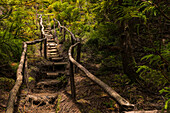 A rustic hiking trail with steps in the lush green forest of the Azores island of Terceira