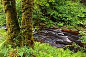 Footpath and river at Glenbranter, Argyll, Scotland UK
