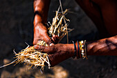 An old man with distinctive hands collects straw in Namibia, Africa
