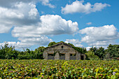 White clouds, derelict chateau, in front of it grapevines, Saint Emilion, Gironde, Nouvelle-Aquitaine, France