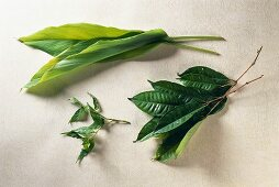 Curry leaves, turmeric leaves and salam leaves