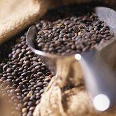 Black lentils in jute sack with scoop