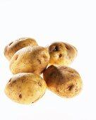 Five potatoes, variety 'Eigenheimer'
