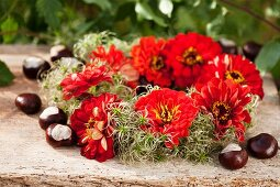 Wreath of zinnias and clematis seed heads with chestnuts
