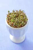 Cress sprouts in an egg cup