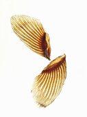 Two dried fugu fins