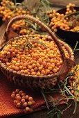 Fresh sea buckthorn berries in basket