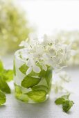Ice beaker with hydrangea flowers and mint