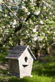 Bird house on apple tree
