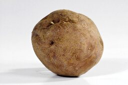 A potato (variety 'Edzell Blue')