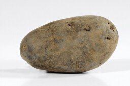 A potato (variety 'Blaue Elise')