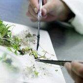 Examining plants