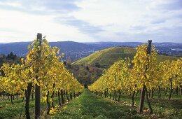 Vineyards near Kleinbottwar, Bottwar Valley, Württemberg, Germany
