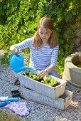 A girl watering lettuce seedlings in a flower box