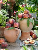 Whole peaches in terracotta vases, peach halves on plate