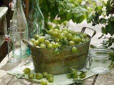 Green gooseberries in metal jardiniere, bottles and jars