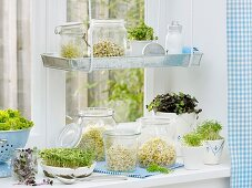 Various sprouting seeds on kitchen window sill