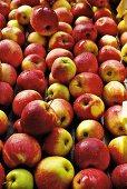 Äpfel auf Förderband werden gewaschen
