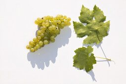 White wine grapes, variety 'Faber'